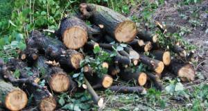 Wytnij, posprzątaj i zabierz drewno na opał ! ZA DARMO !